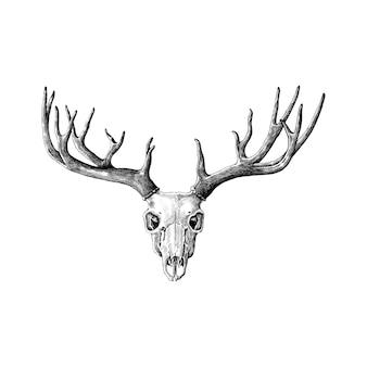 白い背景に描かれた手描きの鹿