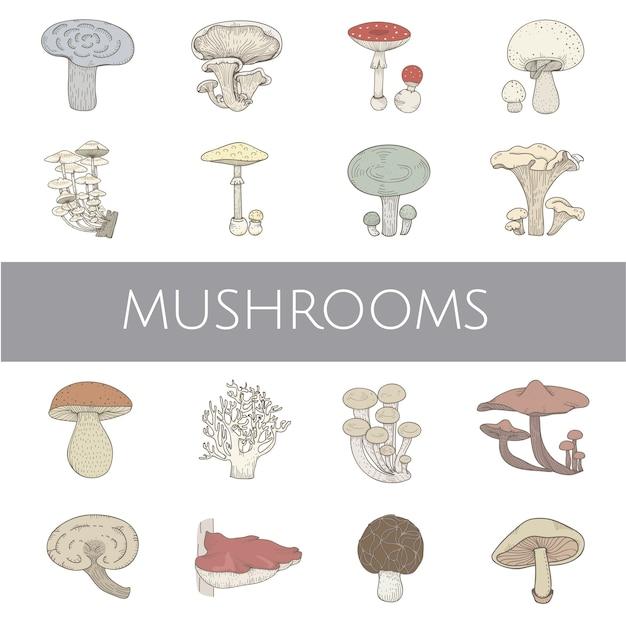Различные виды грибов