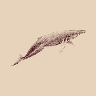 ザトウクジラのイラストの描画スタイル