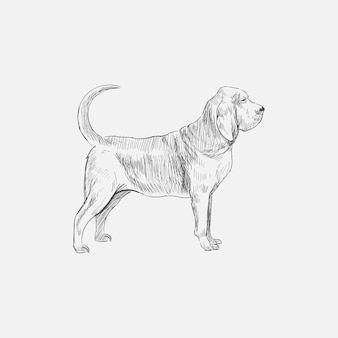 犬のイラストの描画スタイル