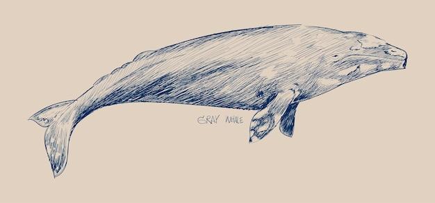 灰色のクジラのイラストの描画スタイル