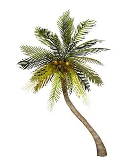 トロピカルココヤツの木のイラスト
