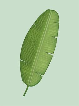 トロピカルグリーンバナナの葉のイラスト