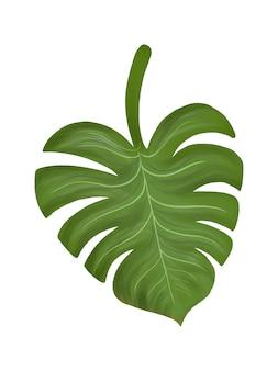 Иллюстрация тропического древовидного листа филодендрон