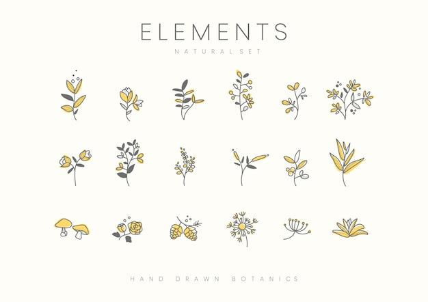 Набор рисованных векторных элементов ботанических элементов