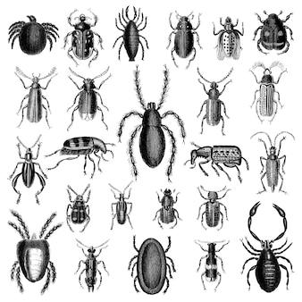 Иллюстрация набора различных насекомых