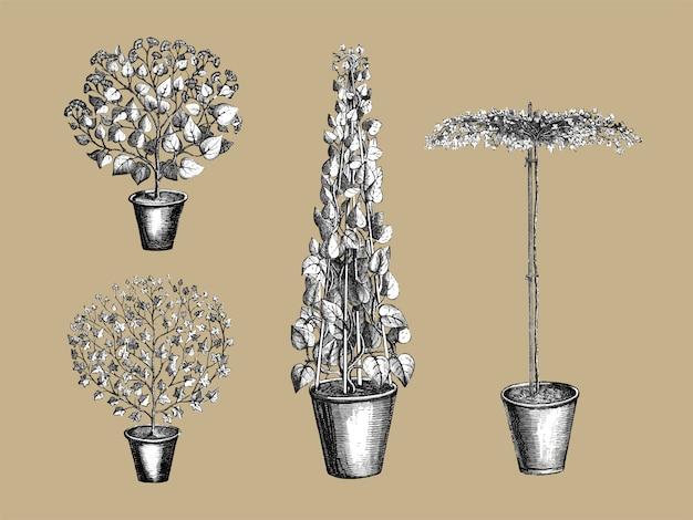 ヴィンテージ植物と葉のイラスト