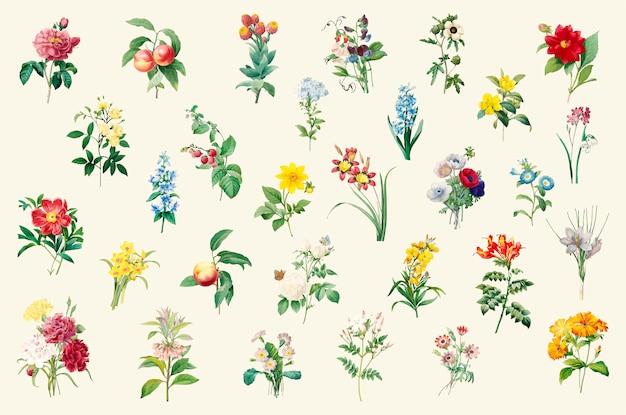 美しい咲く野生の花のセット