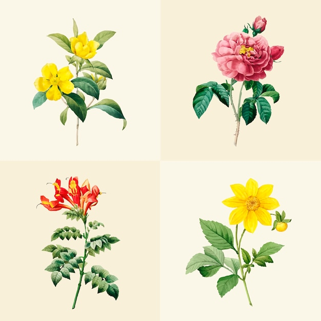 Набор красивых цветущих полевых цветов