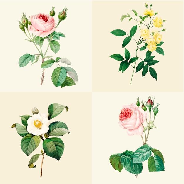 美しい咲くバラのセット
