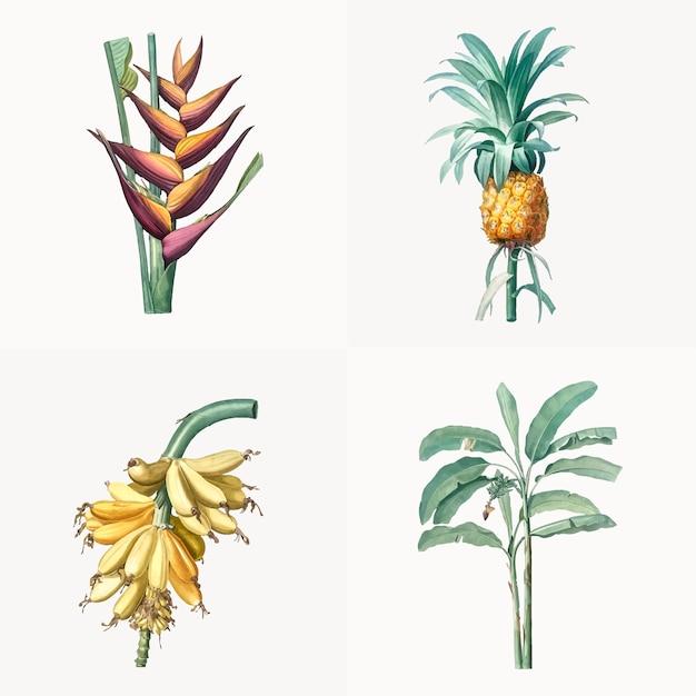 熱帯植物のセットのヴィンテージイラスト
