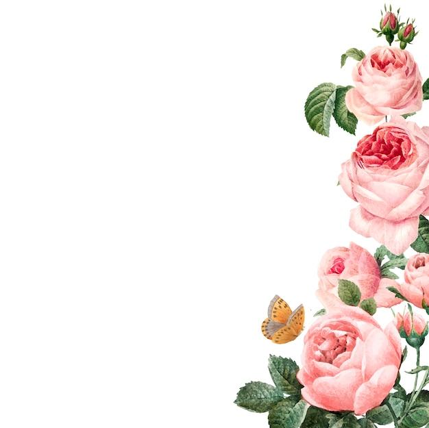 Ручной обращается розовые розы кадр на белом фоне вектор