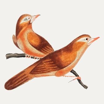 中国の鳥が描かれた中国絵。