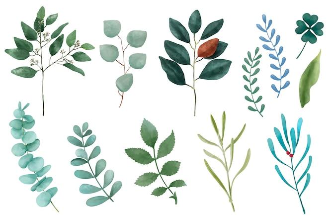 Различные виды иллюстрированных листьев растений, изолированных на белом фоне.