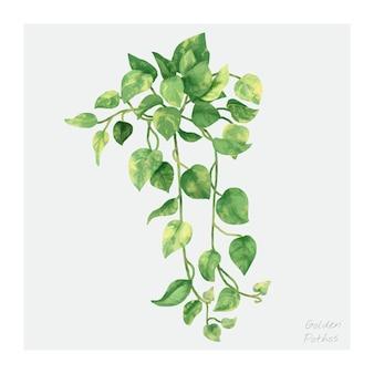 ゴールデンポトスの葉は、白い背景に