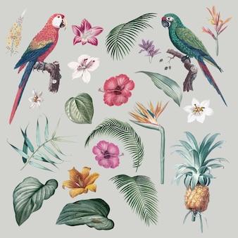 コンゴウインコの葉のイラスト