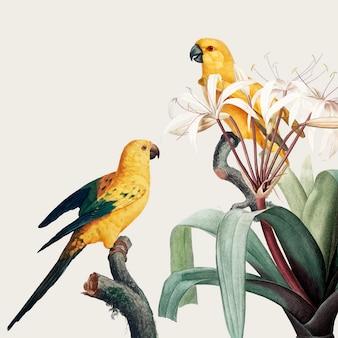 コンゴウインコ熱帯イラスト