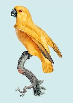Редкий желтый сенегальский попугай