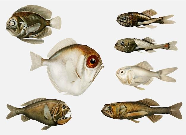 深海魚の品種
