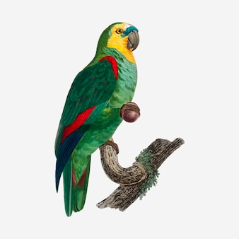 Бирюзовый попугай