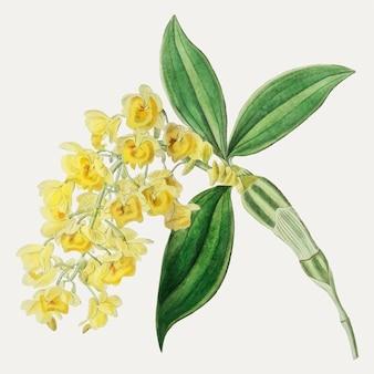 黄色い花の枝