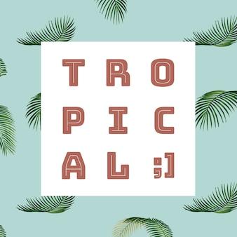 熱帯の夏のパターン図