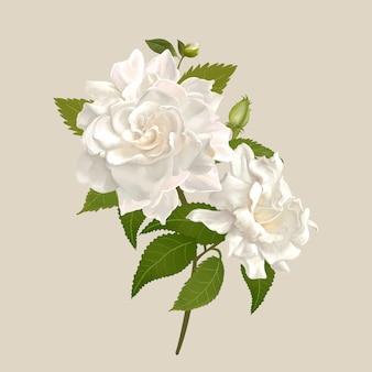 Белые цветы гардении