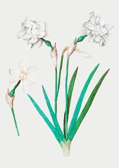 ビンテージスタイルの白い水仙