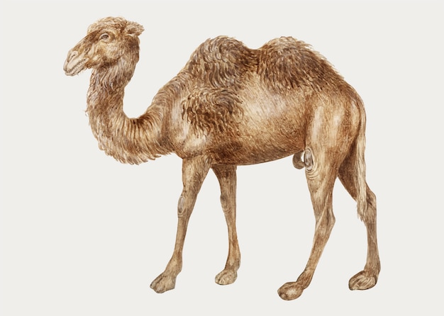 Верблюд в винтажном стиле