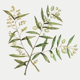 Оливка в винтажном стиле