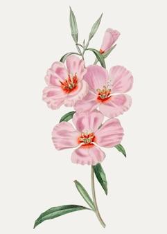 Розовый гибискус