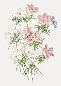 レプトシフォンの花