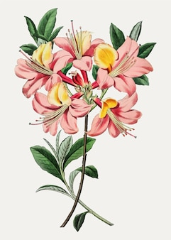 ピンクのツツジの花