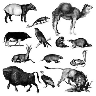 動物のヴィンテージのイラスト