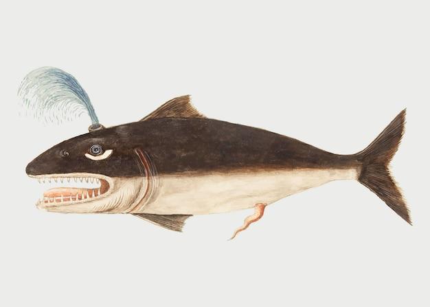ビンテージスタイルのクジラ