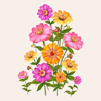 美しい百日草開花植物イラスト