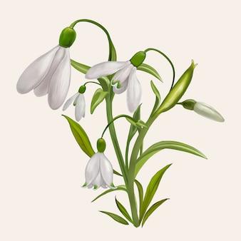 美しいスノードロップ開花植物イラスト