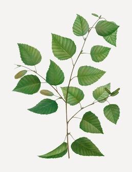 紙の白樺の木
