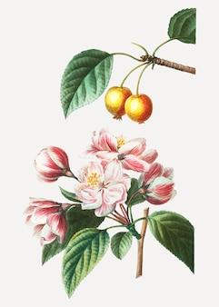 クラブアップルフルーツの木