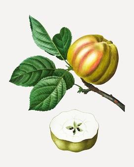 枝にリンゴ