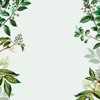 Зеленая ботаническая рамка