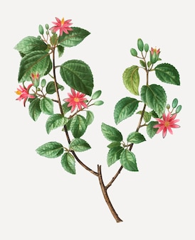 クロスベリー植物