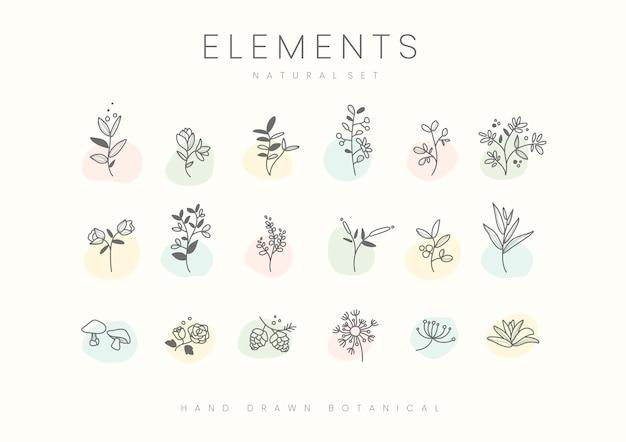 手描き植物要素ベクトルのセット