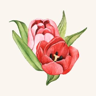 手で描かれたチューリップの花が孤立
