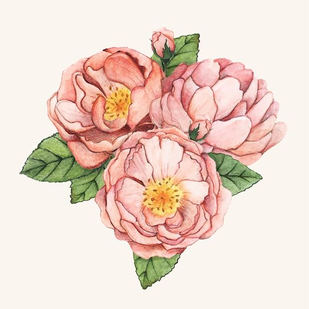 Рисованный цветок пиона изолирован