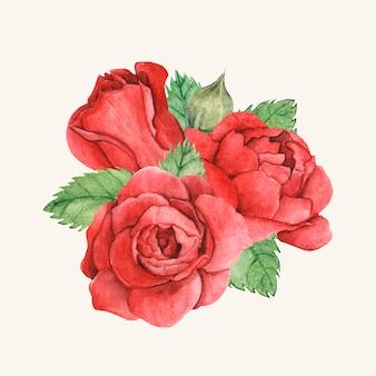 手で描かれた赤いバラ