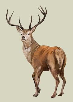 Рисованной олень