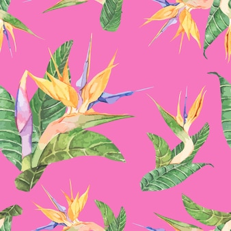 手を引く鳥のパラダイス花を孤立させた
