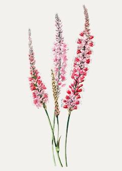 装飾のためのヴィンテージの茎を握る多角形の花の枝