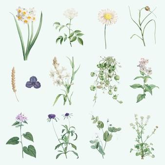 混合夏の花